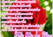 Dia_Dos_Maes_1390066381_m001