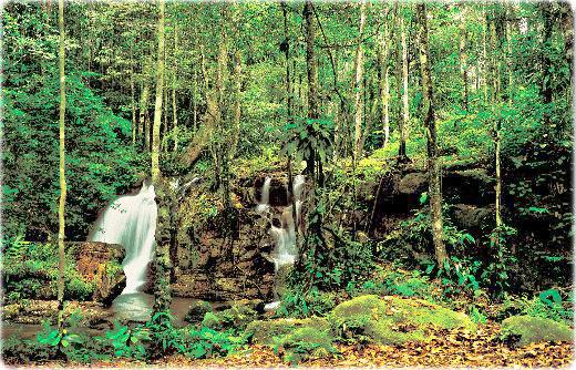 governo-fara-novo-plano-para-codigo-florestal