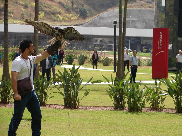 As aves de rapina despertaram grande interesse do público