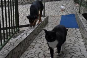 A cadela Priscila e a gata Fênix